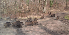 Sous Bois pour la chasse